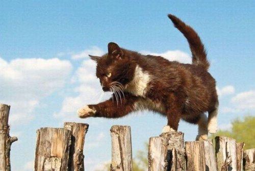 Позитивная подборка животных (38 фото)