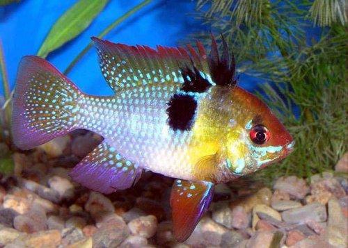 Аквариумные рыбки (31 фото)