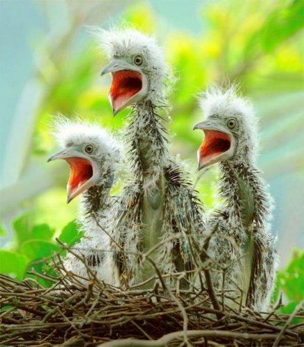 Красивые и смешные фотографии птиц (25 фото)