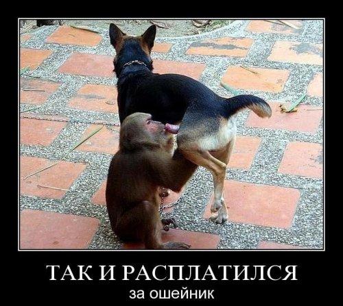 Демотиваторы про животных (18 фото)