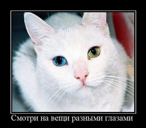 Демотиваторы про КОТЭ (45 фото)