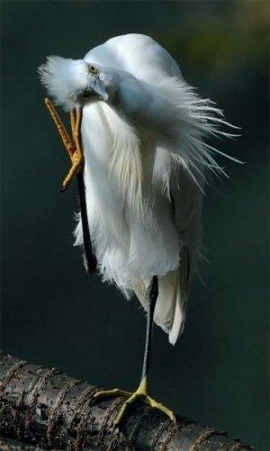 Красивые фото птиц (32 фото)
