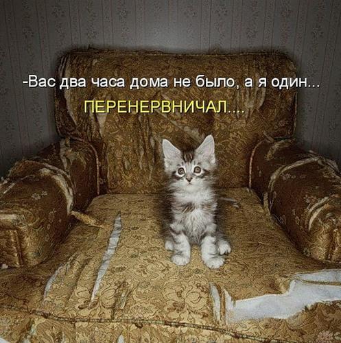 Весёлая котоматрица (23 фото)