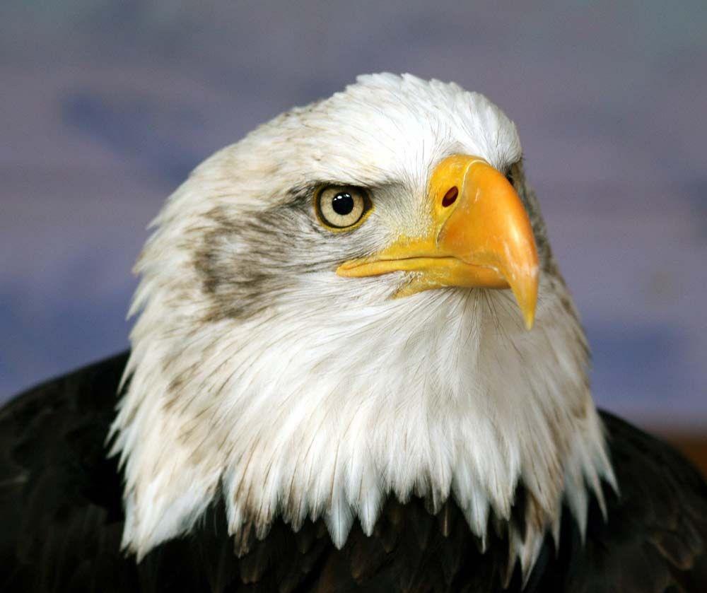 гордая птица фото