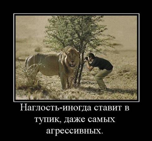 → демотиваторы про животных 28 фото