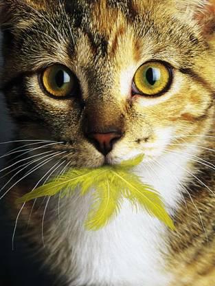 Это интересно: Факты про кошек
