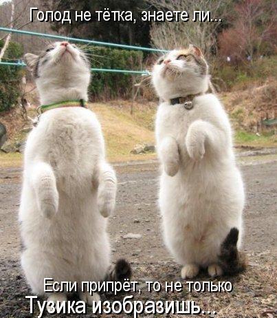 Весёлая котоматрица (32 фото)