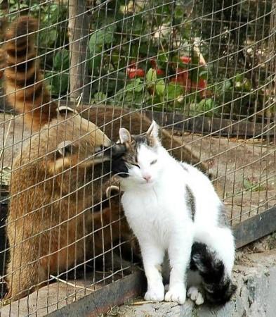 Прикольненькие кошки... и не только... (35 фото)