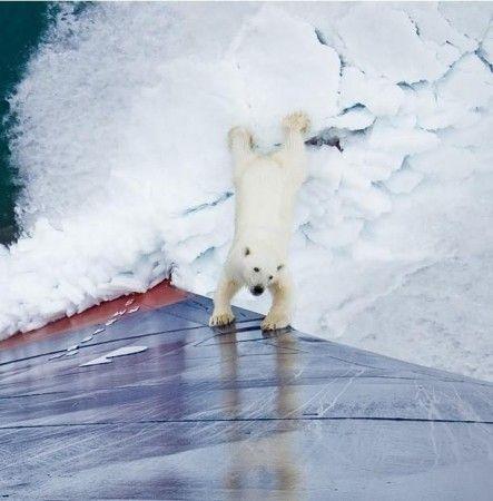 Храбрая медведица (11 фото)