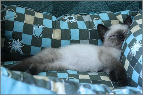 Спят усталые зверюшки (32 фото)