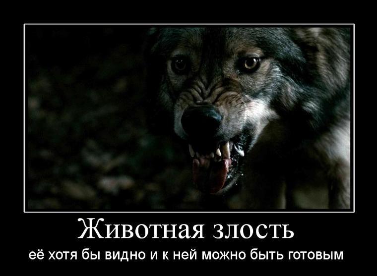 http://klopik.com/uploads/posts/2010-07/1280235614_776072_zhivotnaya-zlost.jpg
