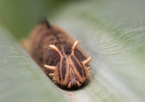 Тропические бабочки (7 фото)