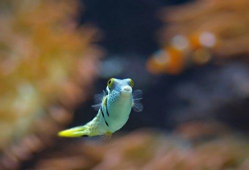 Подводный мир моими глазами, часть II