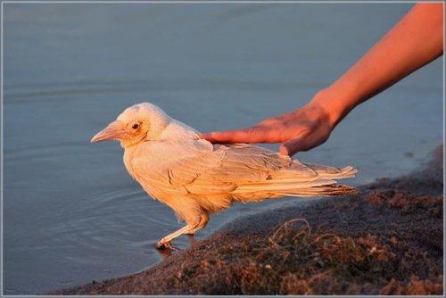 Белая ворона (4 фото)