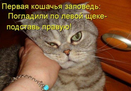 Юмор: Правила кошачьего этикета