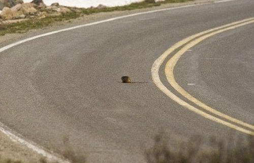 Суслик на дороге (2 фото)