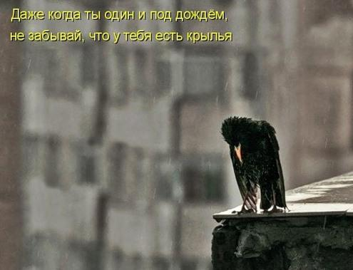 Весёлая котоматрица (38 фото)