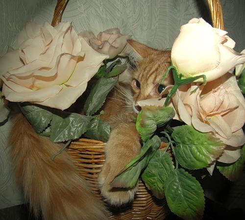 Умельцы маскироваться (30 фото)