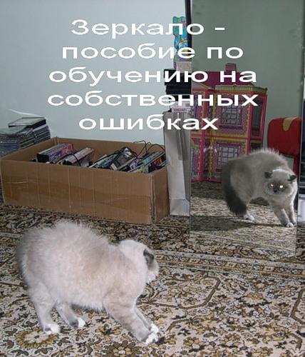 Зеркальное отражение (27 фото)