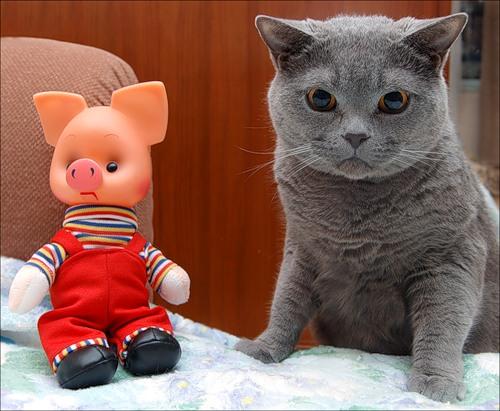 С любимой игрушкой (23 фото)