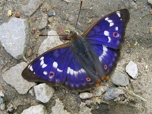 Красивые фото бабочек