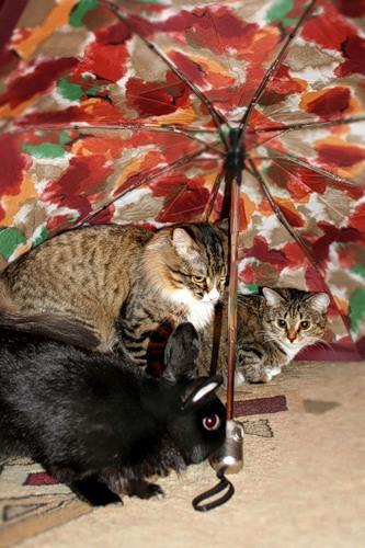 Под зонтиком (17 фото)