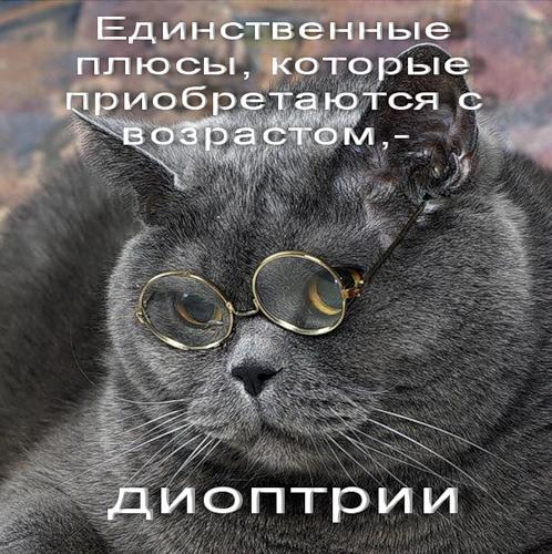 Животные в очках (22 фото)