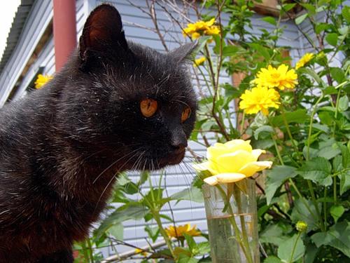 Животные и цветы (23 фото)