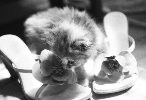 Маленькие комочки (32 фото)