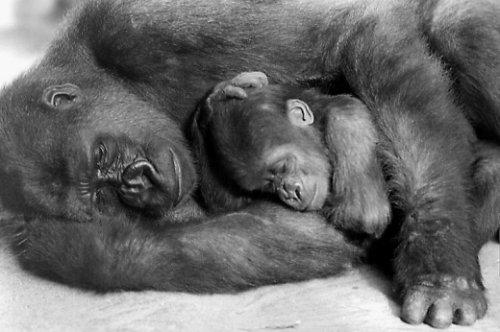 Спящие животные (15 фото)