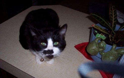 Кошечки с пятнышками на мордашке (21 фото)
