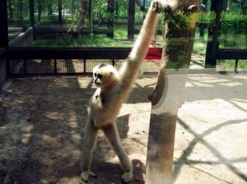 Эти забавные животные (25 фото+гифки)
