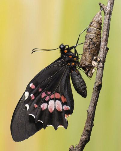 Чтиво: Бабочка