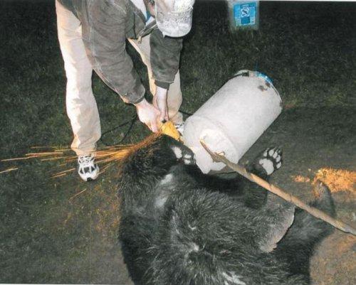 Спасение медвежонка (10 фото)
