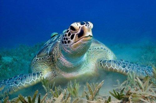 Морские черепахи (10 фото)