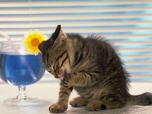 Это интересно: О кошках