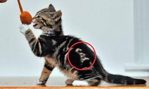 Необычный котёнок (5 фото)