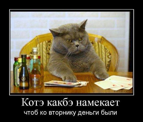 Демотиваторы про животных (27 фото)