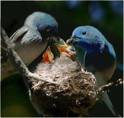 Птенчики (30 фото)