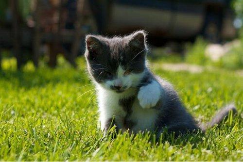 Слепой котёнок (13 фото)