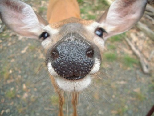 Эти забавные животные (28 фото)