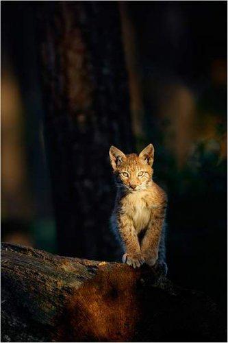 Фотограф Peter Lindel (36 фото)