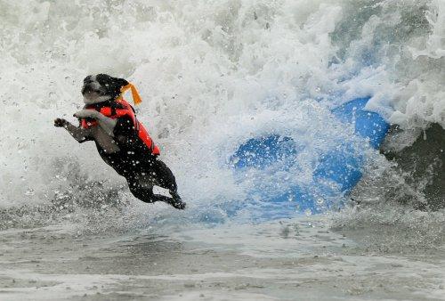 Турнир по серфингу среди собак (20 фото)