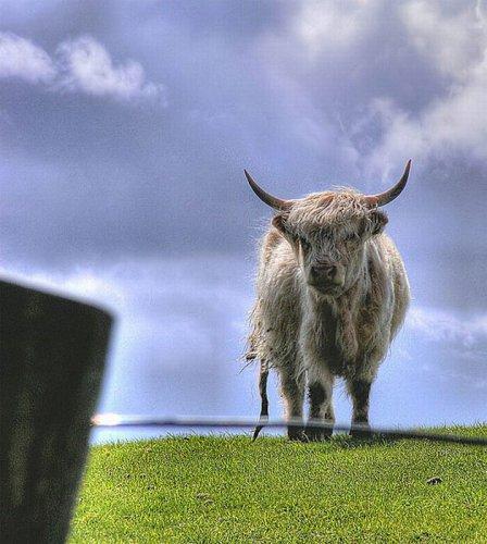 HDR фото животных (44 фото)