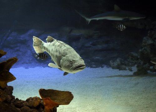 Подводный мир моими глазами, часть III (6 фото)