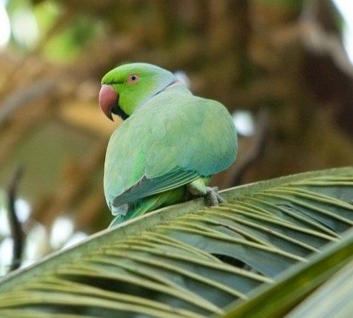 Чтиво:Поручение попугая