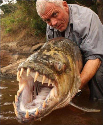 Рыба-монстр (6 фото+видео)