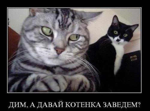 Демотиваторы про животных (24 фото)