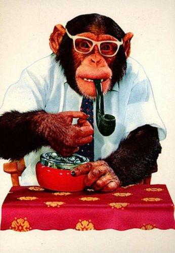 Курящие обезьяны (24 фото)
