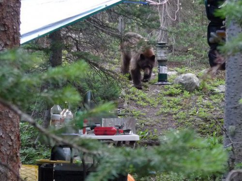 Медведи в гостях у туристов (6 фото)